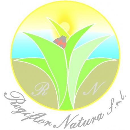 Betula alba- semi