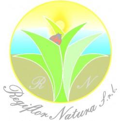 Betula alba- foglie